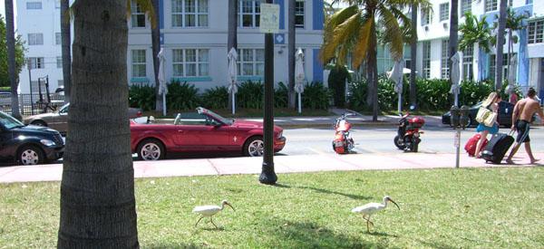 Miami_street